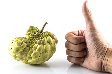 sweetsop: Mano come Sugar Apple (custard apple, Annona, sweetsop, Cherimoya frutta) su sfondo bianco