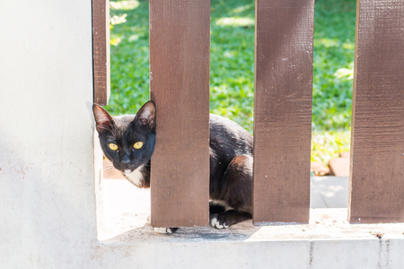 stranger: Curious cat behind the brown fence and looking for Stranger Stock Photo