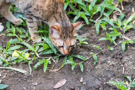 chasing tail: Cat see and catching a mouse on green grass