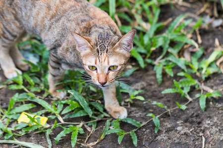 wrathful: Cat see and catching a mouse on green grass