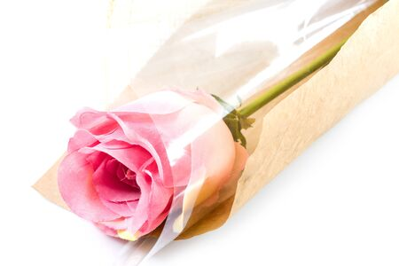 Pink fabric roses on white background photo