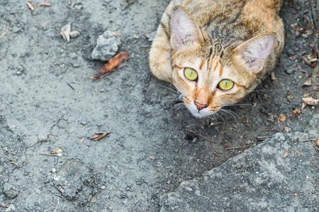 intensely: A tabby cat staring at the camera Intensely