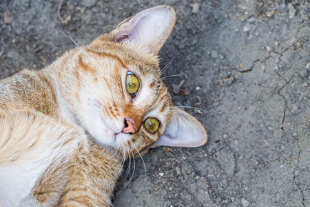 calico whiskers: A tabby cat staring at the camera Intensely