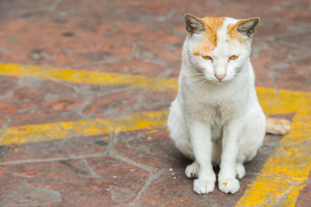 Cat sitting on the street and waiting for owner photo