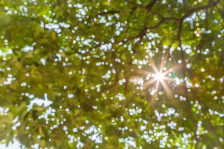nature bokeh background with sun beam with tree leaves in defocus photo