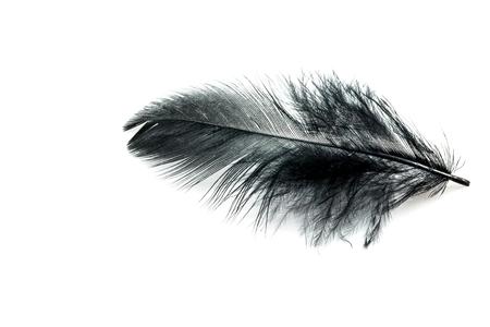 Black feather isolated on white blackground photo