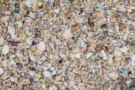 Seashells collection on the sand background photo