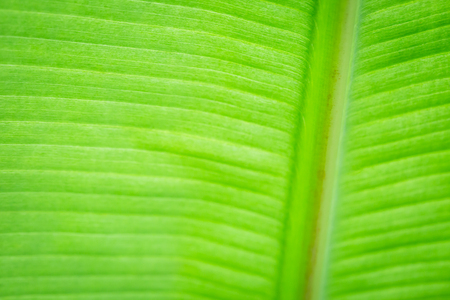 Texture of backlight fresh green Leaf background photo