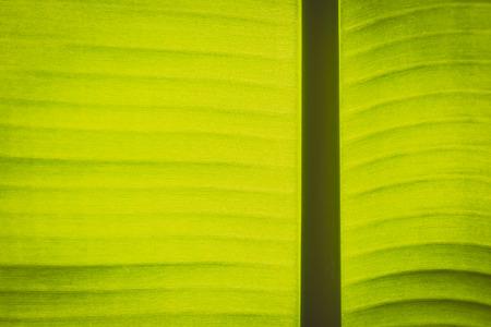 Vintage Textur der Hintergrundbeleuchtung frischen grünen Blatt Hintergrund