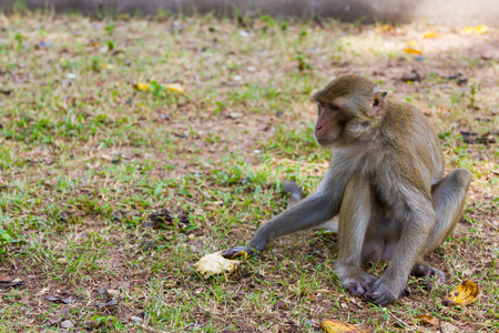 Baby monkey sits on grass and eats banana alone photo