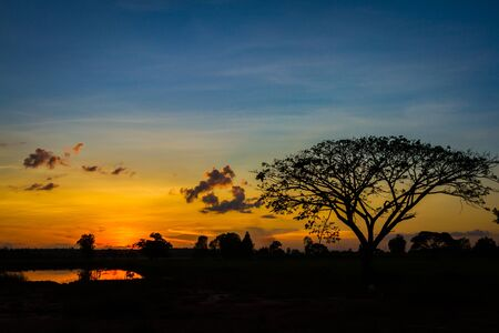 Big tree silhouette on sunset  sky background photo