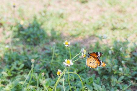 viceroy: Beautiful butterfly perching on yellow flower with green bokeh background