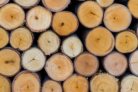pile of logs: pile of cut tree logs wood texture background Stock Photo