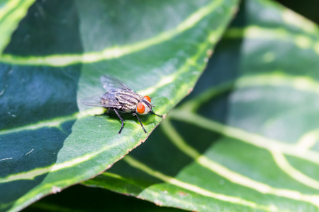 perching: Fly perching on green leaf blackground