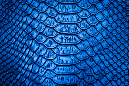 leather skin: Blue snake skin pattern texture background