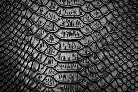 serpent: Black snake skin pattern texture background Stock Photo