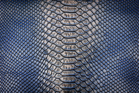 reptilian: skin leather texture use for background