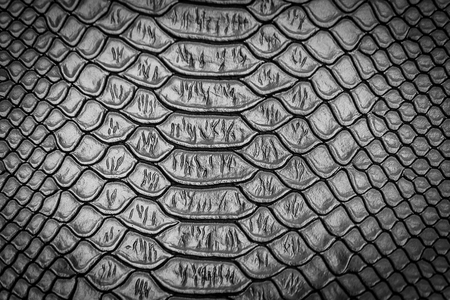 close up of snake skin texture use for background