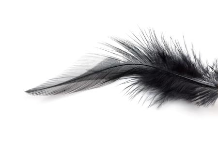 Close-up de la plume noire isolé sur fond blanc