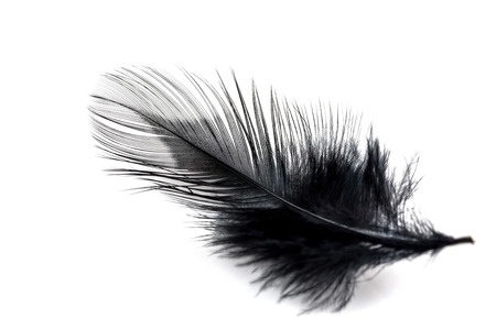 black feather: Close-up of Black feather isolated on white background