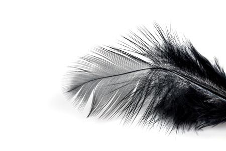 Close-up de la plume noire isolé sur fond blanc Banque d'images