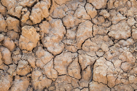 during: Background of Dry cracked soil during drought environment