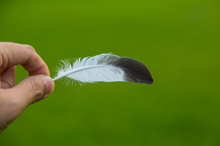 Hand holding a feather in front of green natural background