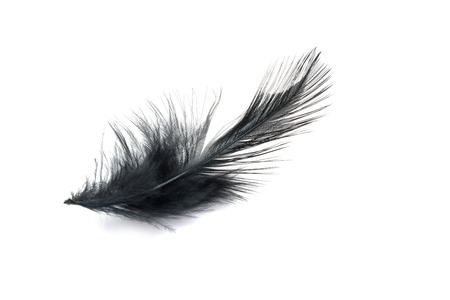 black feather: Black Feather isolated on white background