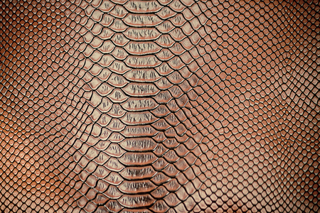animal scale: Close up of Luxury snake skin texture use for background Stock Photo