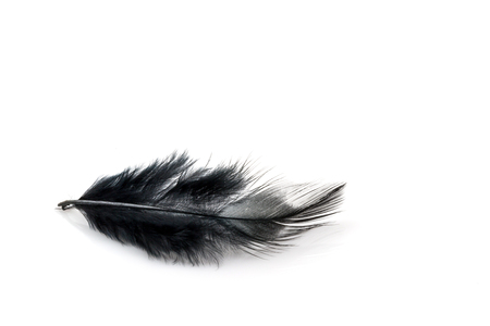 black feather: Black feather on white background