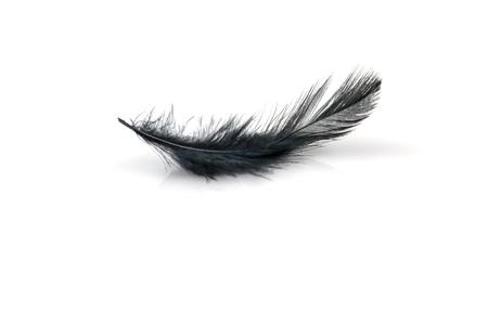 Zwarte veren op witte achtergrond