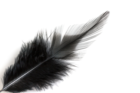 black feather: Close up of black feather isolated on white background