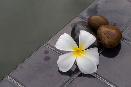 florae: White with yellow plumeria flower on pebble rock and water for spa for spa background