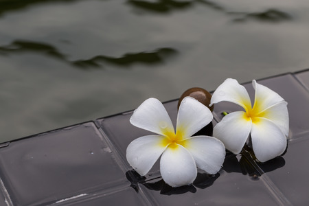 florae: White with yellow plumeria flower on pebble rock and water for spa background