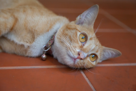 Young ginger cat restting on the floor Stock Photo