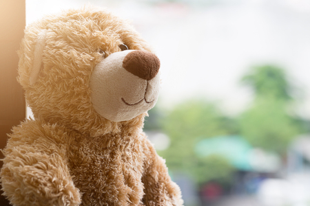 Lonely bear on the window with green bokeh background Stock Photo