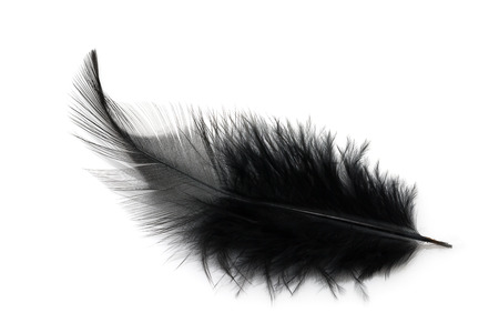 Black feather isolated on white background Stockfoto