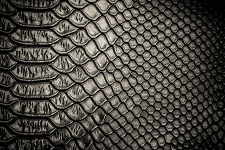 snake skin: Black snake skin pattern texture background Stock Photo