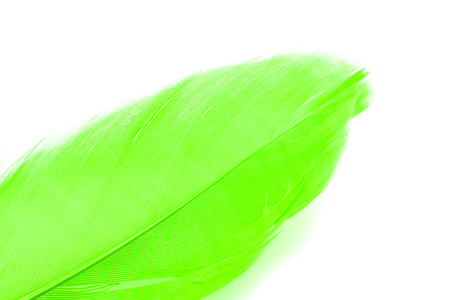 Green feather isolated on white Stock Photo