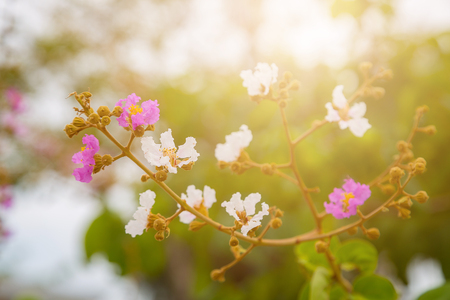 Pink and white flower with bokeh background stock photo picture and pink and white flower with bokeh background stock photo 77950387 mightylinksfo