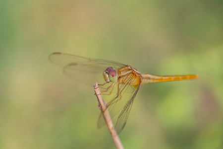 resting: Dragonfly Perched on a Branch top of tree Stock Photo