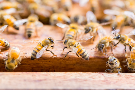 Alot of bees on honeycomb background Stock Photo