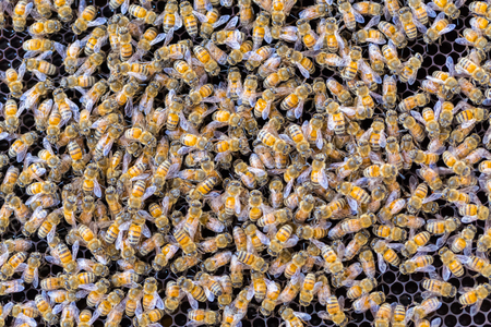 Alot of bees on honeycomb background Imagens