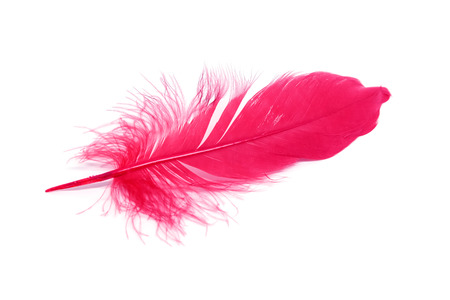Red feathers isolated on white background