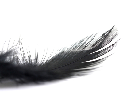 Close up of small and soft Black feather isolated on white background