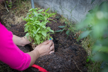 Woman smile and hand holding tree prepare plant on ground for environment Standard-Bild - 117967931