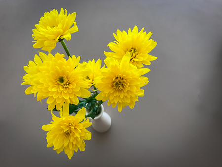 Yellow chrysanthemum in a vase with gray wall background Stock Photo