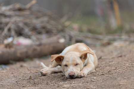 The puppy sleeps on the ground, waiting for the owner with blur background Stok Fotoğraf