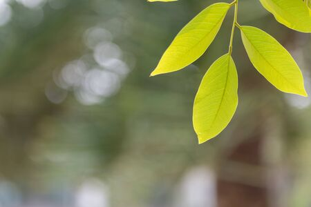Close up of green leaf with blur nature background