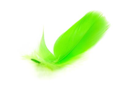 Beautiful green feather on white background
